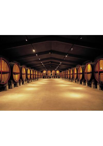 Imposantes Fasslager im Weinkellergewölbe der Bodega Roqueta Abadal