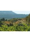 Weinberge von Edetaria in Gandesa, Terra Alta