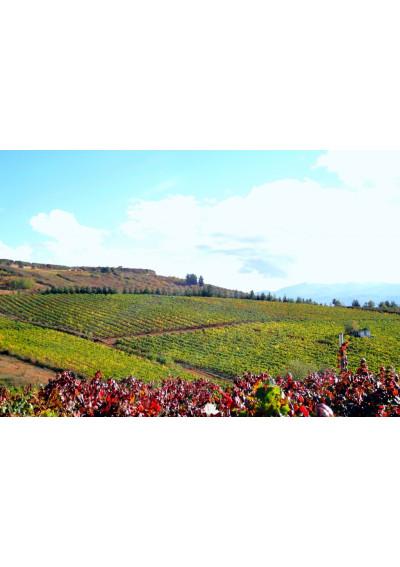 Blick auf den Weinberg der Finca Losada, Bierzo