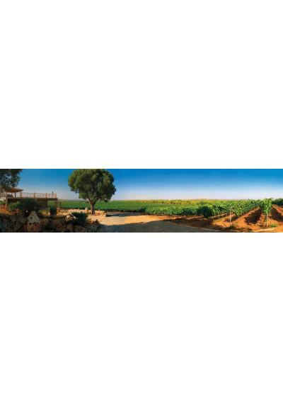 Blick auf den Weinberg de Bodega Galmes i Ribot, Mallorca