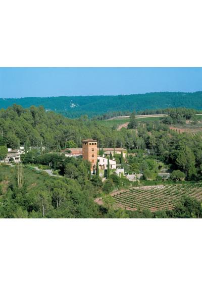 Blick auf den Weinberg von Mas Oliveras, Katalonien