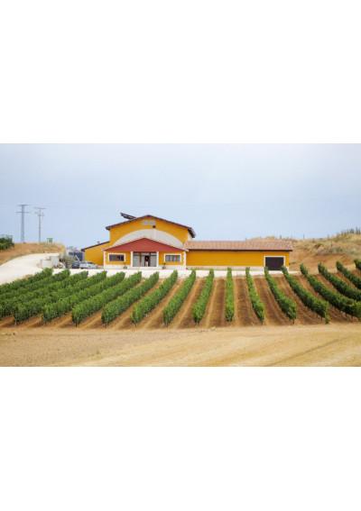 Blick auf das Weingut Bodegas Vizcarra