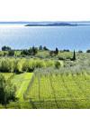 Weinberg von Monte Cigogna bei Moniga am Gardasee