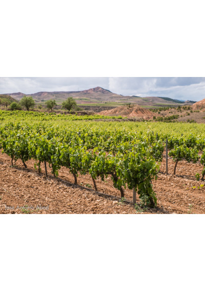 Weinberge in Aldeanueva, Rioja