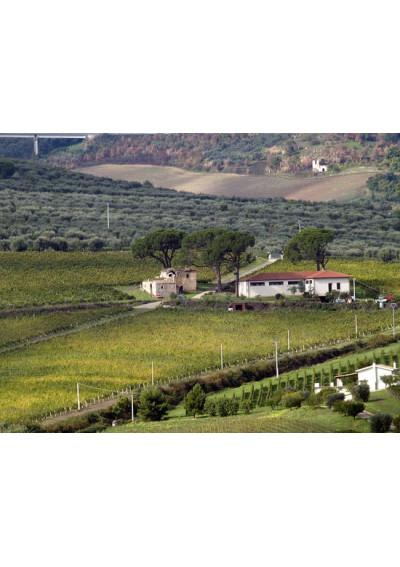 Weingut Donato D'Angelo im Basilikata