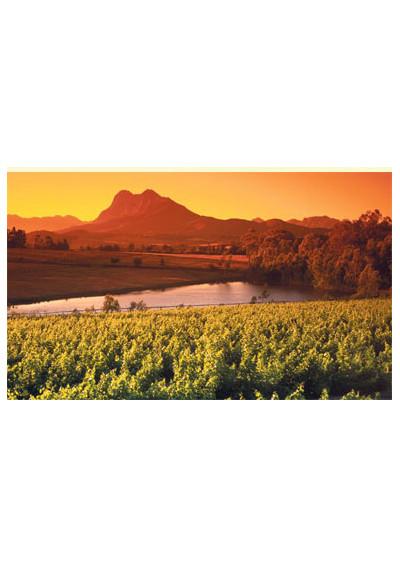 """Weinberg mit """"glühendem"""" Heldberg, Weingut Guardian Peak, Stellenbosch"""