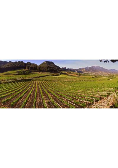 Die Lage El Estepal von Bodegas Muga bei Haro, der Weinhauptstadt von La Rioja