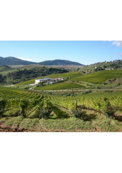 Blick auf den Weinberg von Baglio di Pianetto