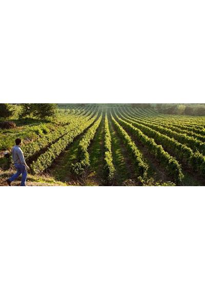 Weinberg Portal de Calçada Vinho Verde