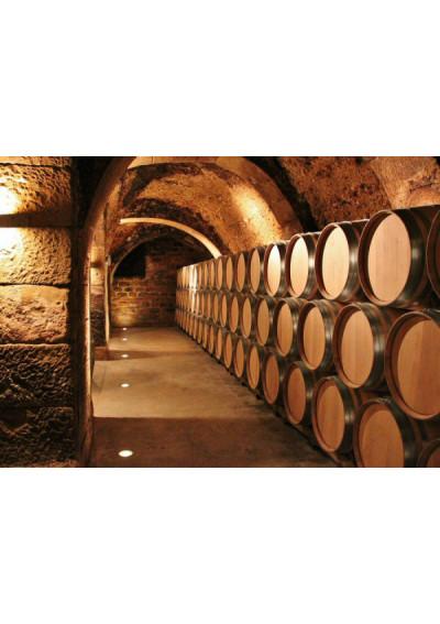 Im Weinkeller Bodegas Borsao