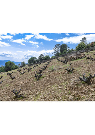 Garnacha-Weinberg Soto Manrique in Cebreros, Sierra de Gredos
