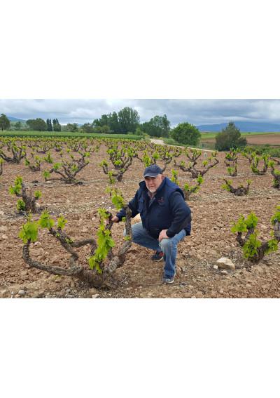 Im Weinberg der Hacienda Grimon, La Rioja