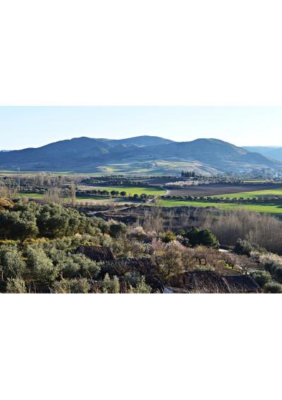 Landschaft mit Weinberg der Hacienda Grimon, La Rioja