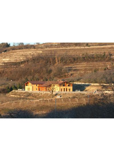 Blick auf den Weinberg der Azienda Agricola Stefano Accordini
